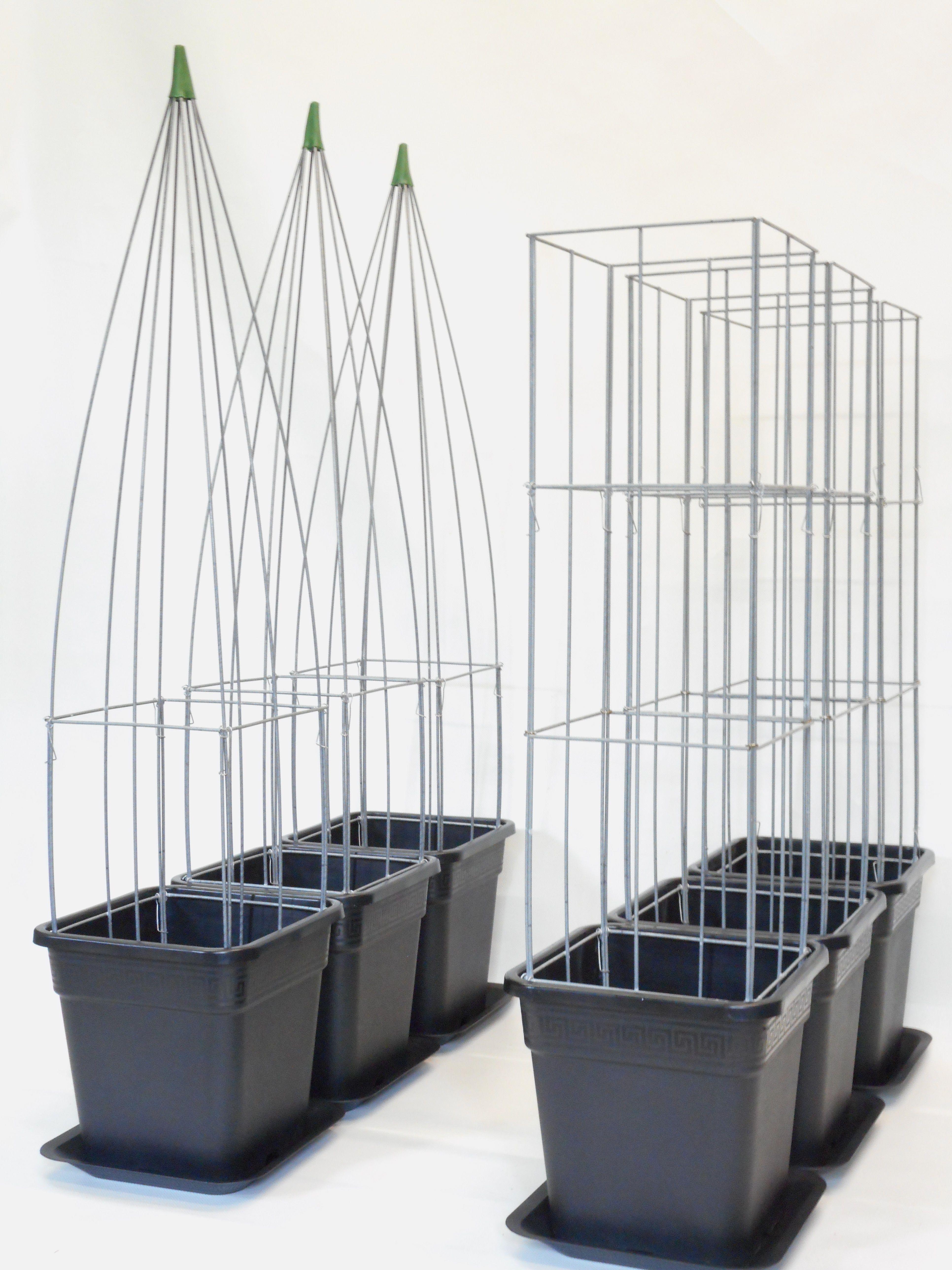 rankhilfe blauregen kletterpflanze rankschirm eisen gartenarbeit. Black Bedroom Furniture Sets. Home Design Ideas
