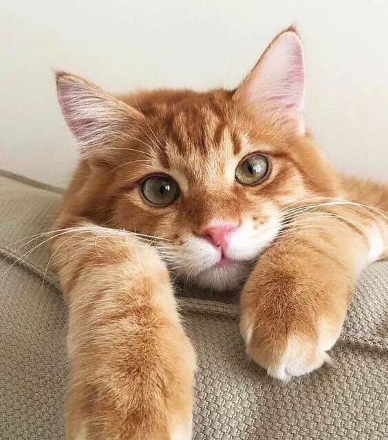(99+)MeWe The NextGen Social Network Cute cats