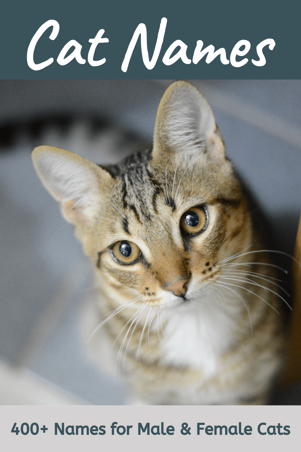400 Cat Names Ideas For Male And Female Cats In 2020 Cat Names Kitten Names Girl Girl Pet Names