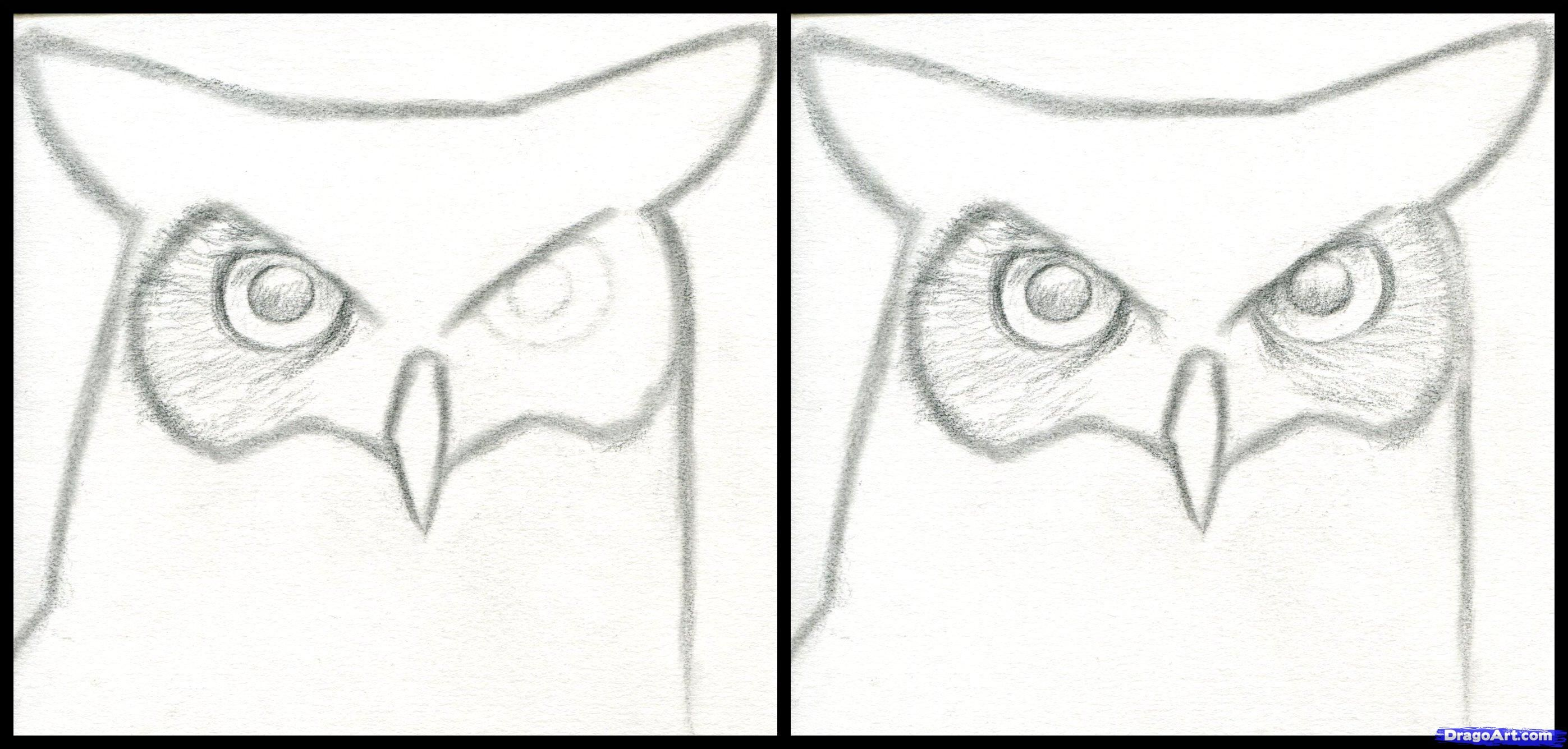 How To Draw A Great Horned Owl Step By Birds Animals FREE