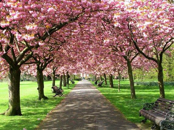 Greeting Cards Pink Blossoms Springtime By Cmjolley On Etsy Beautiful Tree Pink Blossom Landscape