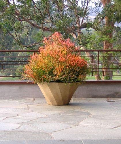 Firesticks succulent planter. Design by Inner Gardens. www.innergardens.com