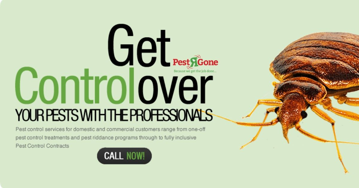 Pest R Gone Have One Of The Specialized Team Of Bed Bugs Extermination Toronto In Which We Always Use The Eco Fr Pests Pest Control Services Pest Control