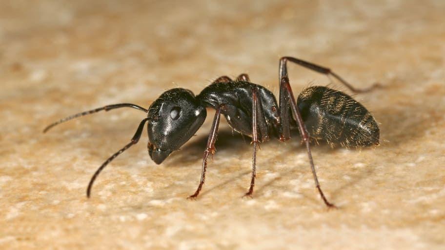 Pin On Cream City Pest Solutions