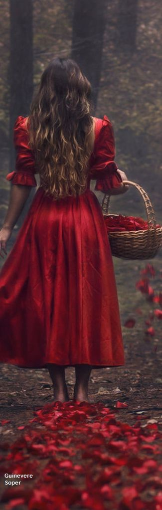 !!! Red Roses !!! l  Parvana Photography