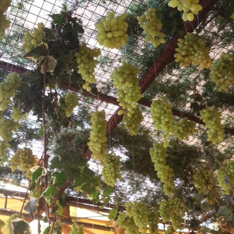 The grapes, Indian wedding
