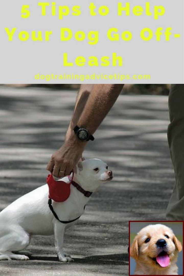 Dog Behavior With Other Dogs And Sniffer Dog Training Courses Near