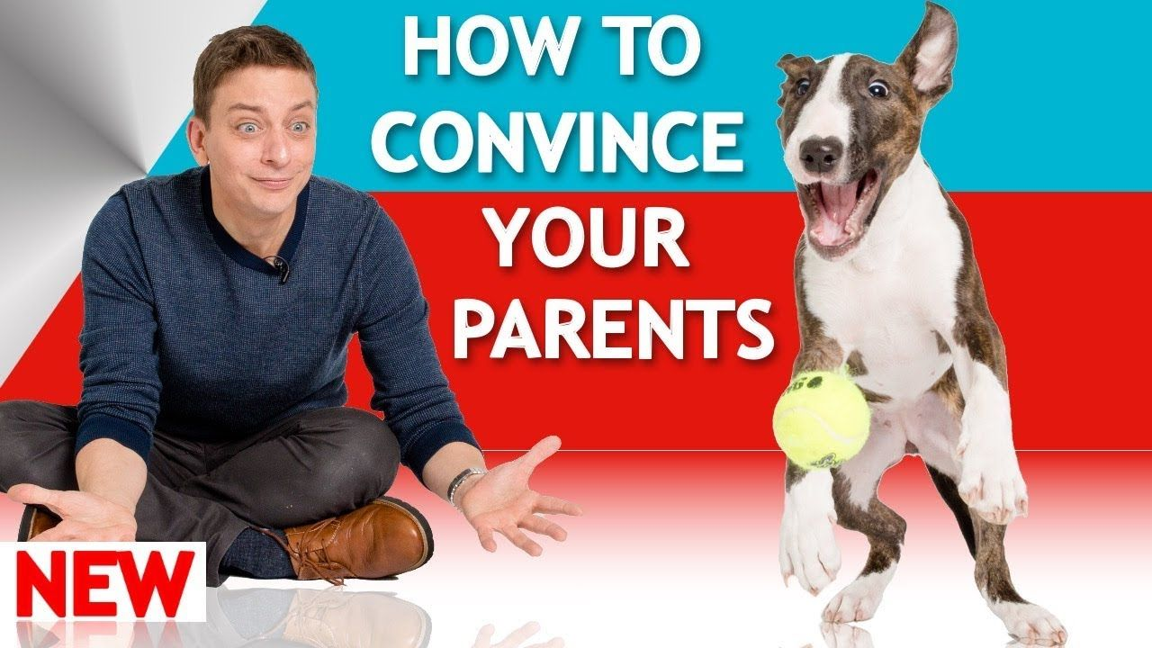 How to convince your parents to let you have a dog