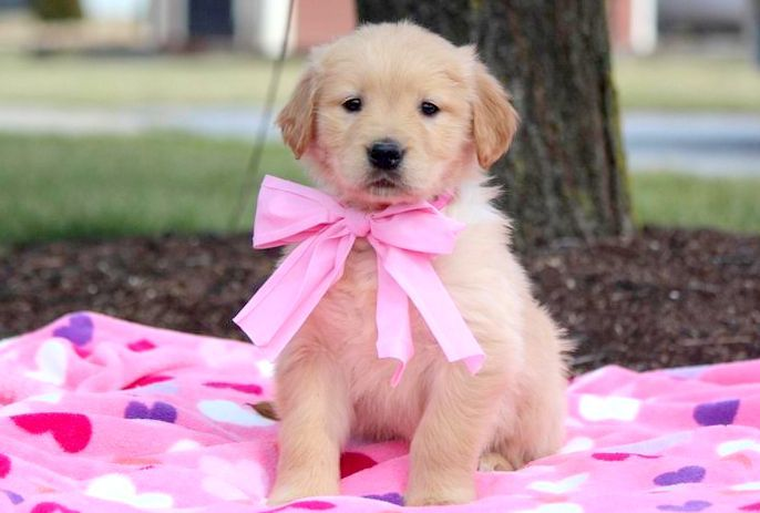 Puppy Finder Find Buy A Dog Today By Using Our Petfinder Perros Animales Cachorros