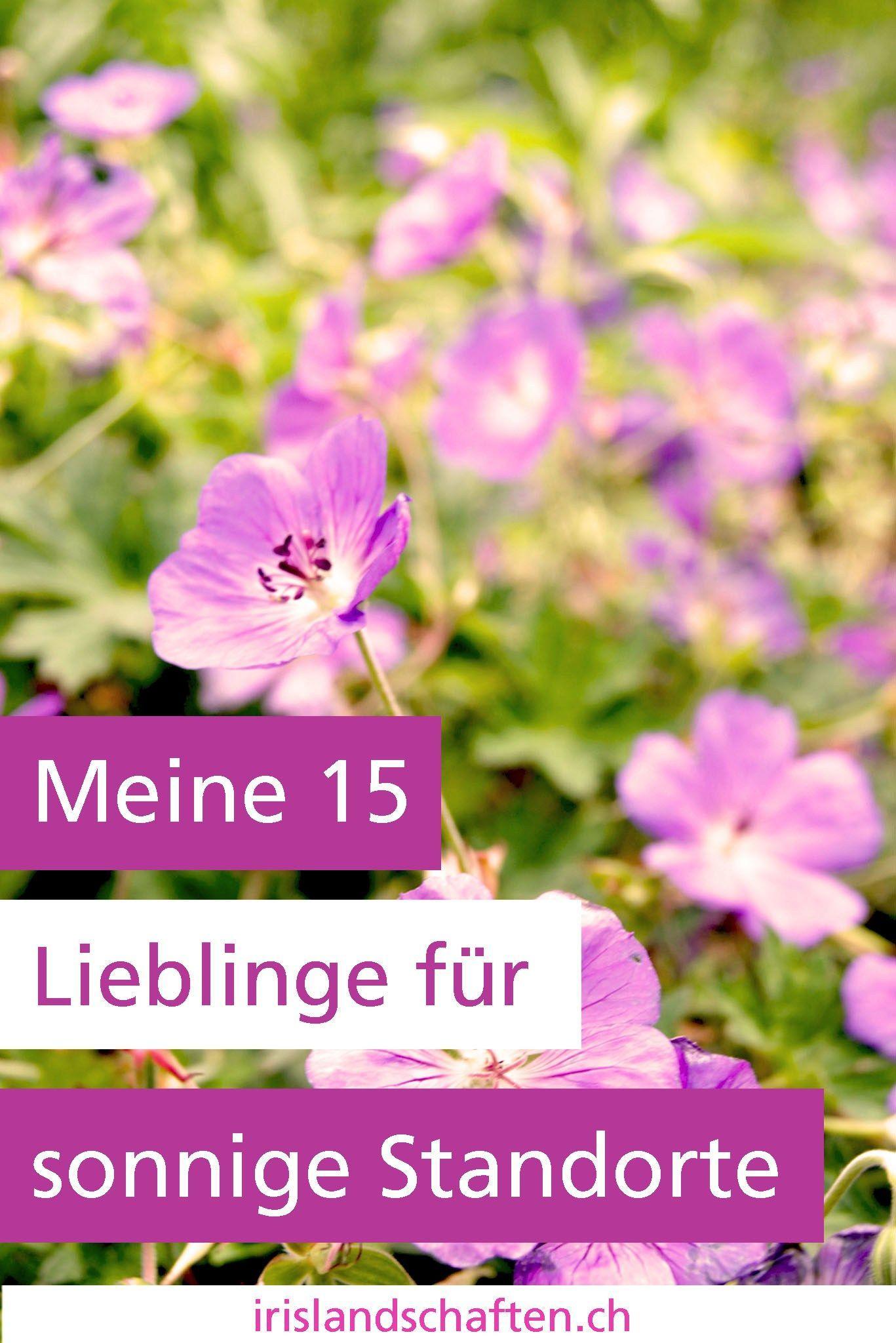 Stauden Sonne Meine 15 Lieblinge Blumenbeetanlegen With Images Perennials Backyard Plants Backyard Garden Design