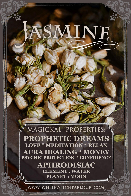 Dried Jasmine Flowers Jasminum Officinale For Love Meditation