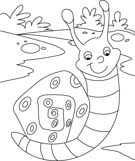 snailcoloringpage2jpg 559 666