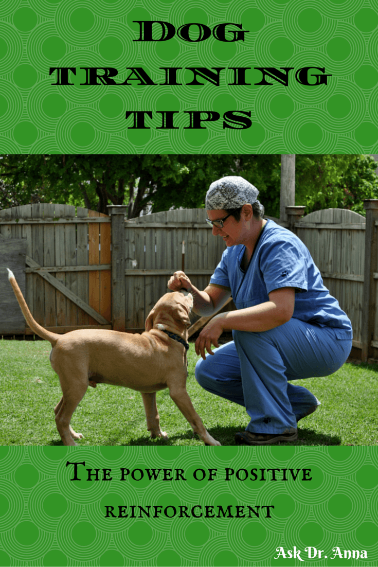 Mastiff Dog Training – One of the Most Important Things You Can Do