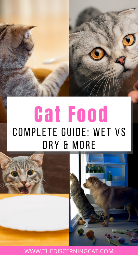 Cat Food Complete Guide Wet Vs Dry More Cat Feeding Guide Cat Feeding Cat Food