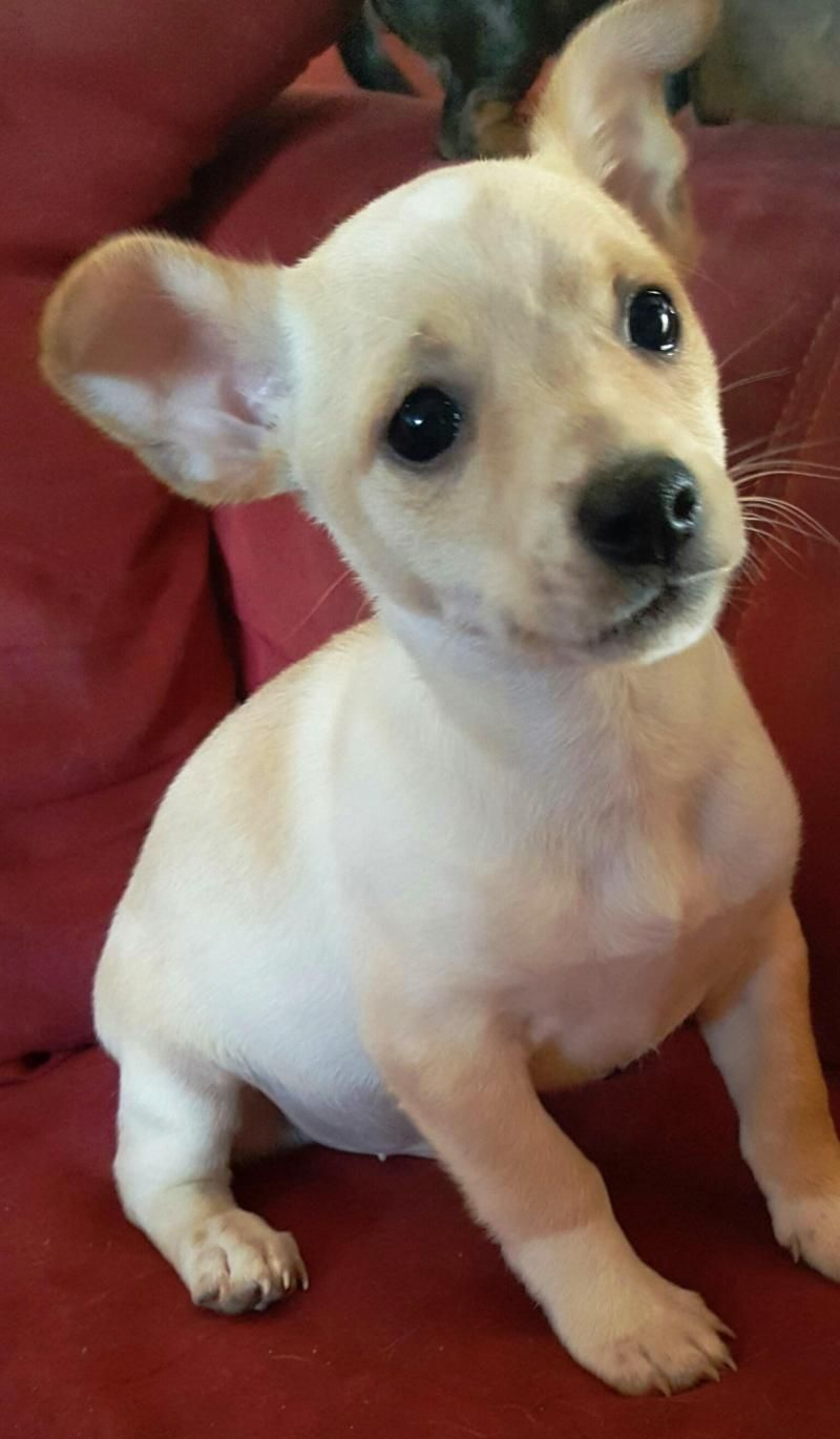Adopt Cesar on Petfinder Animal shelter, Rescue dogs