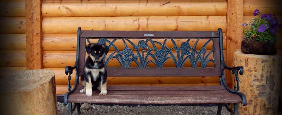 Husky Homestead Tours Denali Alaska Its All About The - Husky homestead