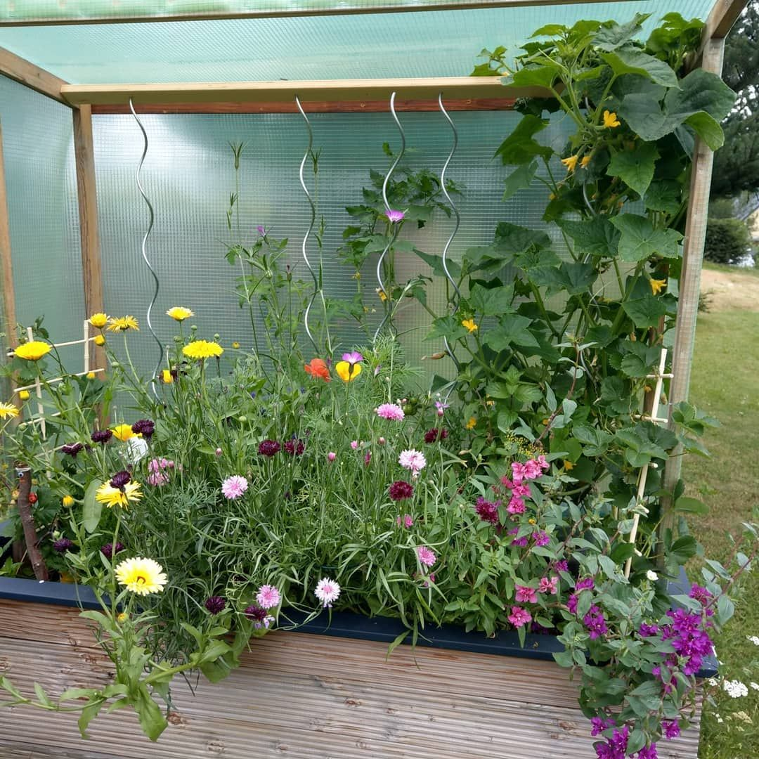 Verliebt In Mein Hochbeet Hochbeet Hochbeetgartnern Garten Gemuse Gurken Tomaten Bienenlust Bienenfreude Buntesommermischung B Garten Garten Ideen Hochbeet