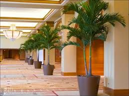 Afbeeldingsresultaat Voor Hotel Lobby Plants Tall Indoor