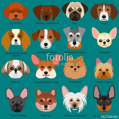 Pin By Sara Miller On Dogs Clipart Dog Face Dog Face Paints Small Fluffy Dog Breeds