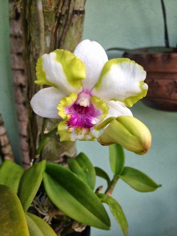 Orquideas Orchid Flower Orchid Flower Arrangements Unusual Flowers