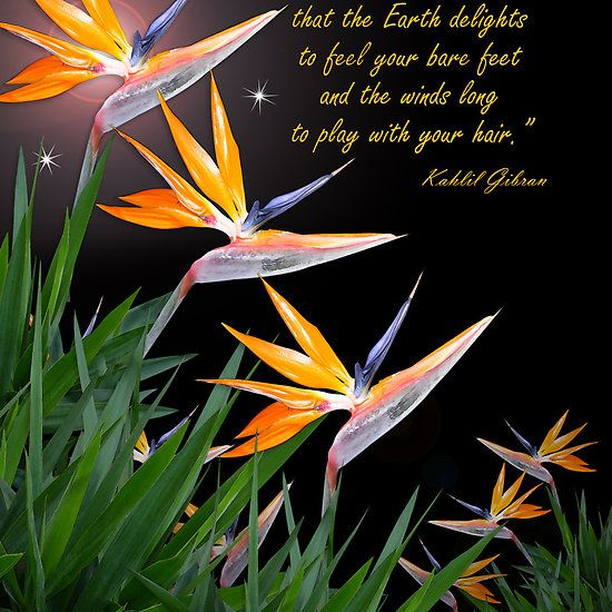 Bird Of Paradise Flowers With Kahlil Gibran Quote By Irisangel Kahlil Gibran Paradise Flowers Kahlil Gibran Quotes