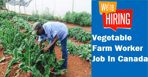 Vegetable Farm Worker Job In Canada | Job Offers worldwide