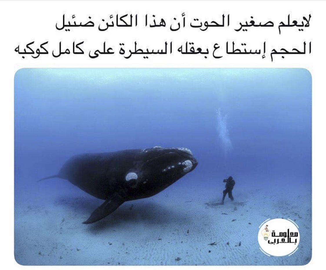 Pin By Majd Chalh On Instagram Animals Whale Instagram