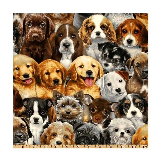 44 Wide Adorable Pets Puppies Galore Cotton Fabric By Elizabeth S Studio Cute Animals Pet Puppy Puppies