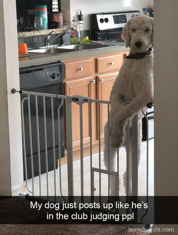 HilariousDogsSnapchats (With images) Funny dog memes