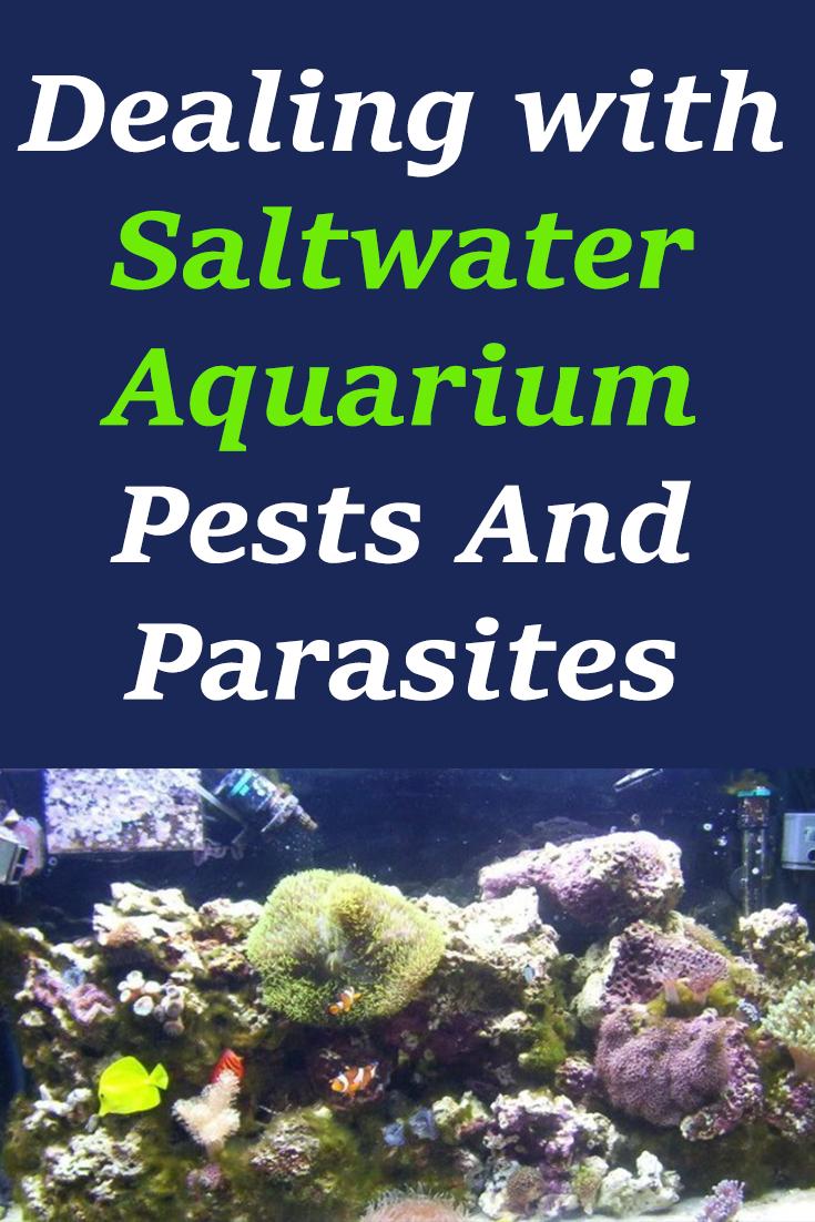 Dealing With Saltwater Aquarium Pests And Parasites Saltwater Aquarium Saltwater Tank Saltwater