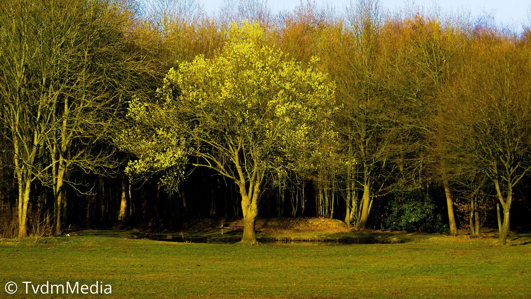 Tree by Ton van de Merwe on 500px