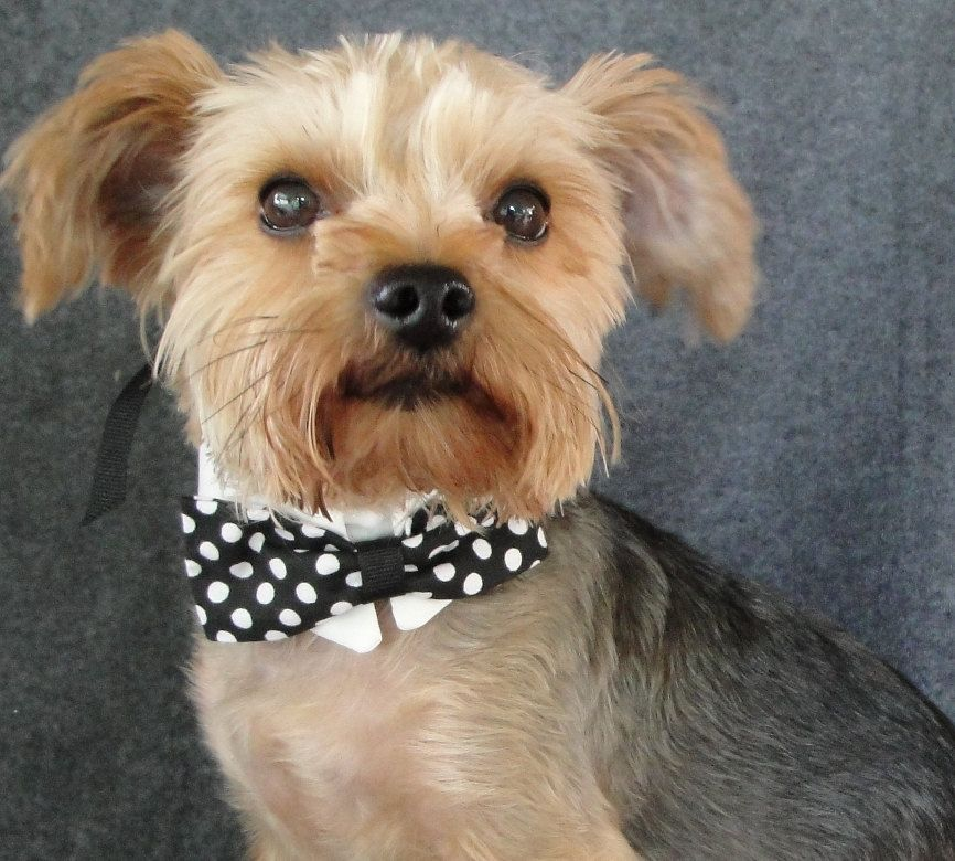 Dog Collar with Bow Tie - Dog Wedding Attire Formal Pet Wear and ...