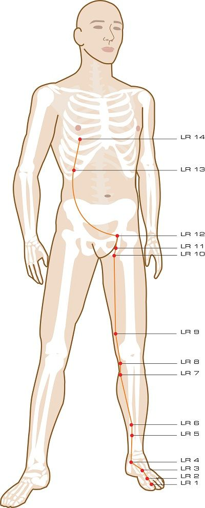Liver Acupuncture Points | Traditional Chinese Medicine