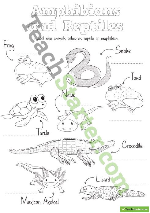 A worksheet highlighting which animals are reptiles and which are
