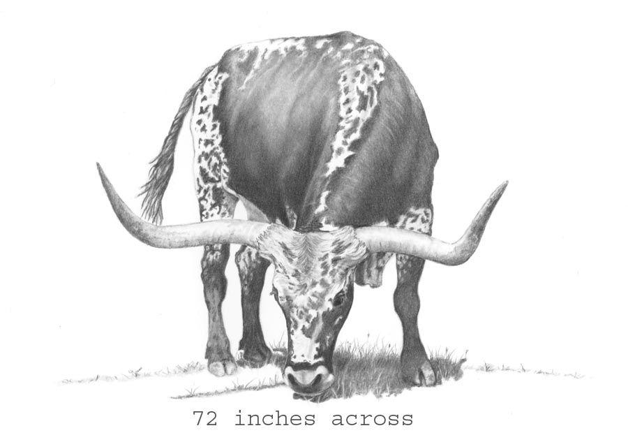 Longhorn Cattle Drawing Sketch Horse Drawings In 2019 Pinterest