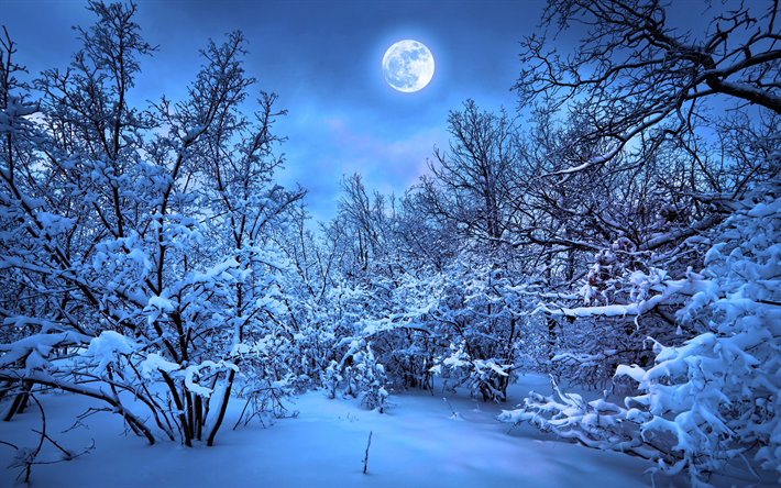 Download Wallpapers 4k Winter Forest Night Moon