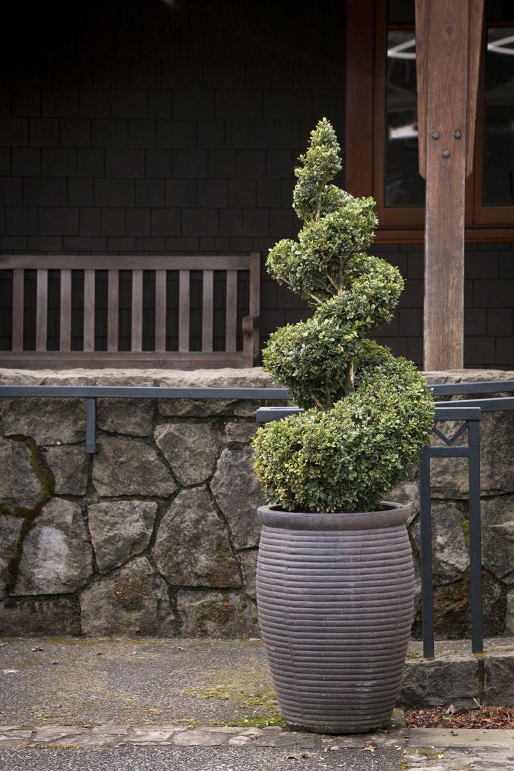 Buchsbaum Formschnitt Anleitungen Zum Formen Von Heckenpflanzen