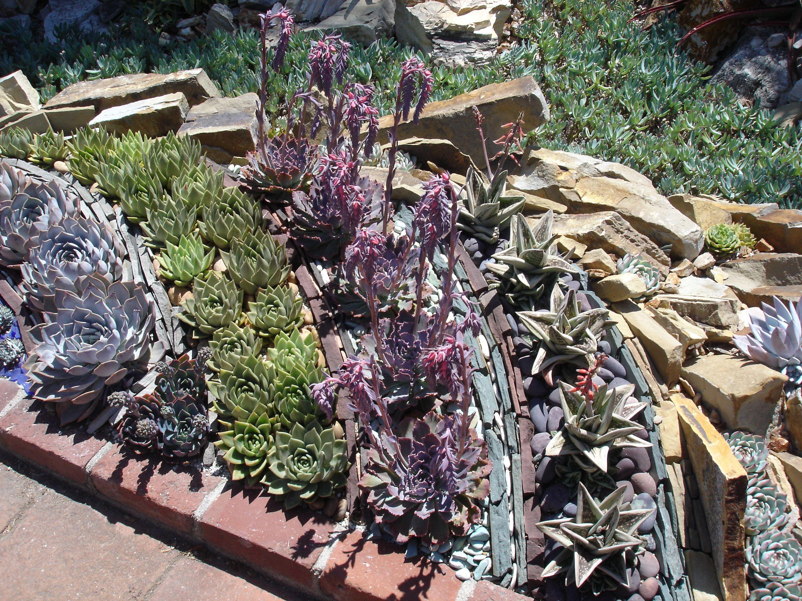 5232fe680d8b6edb967baefb559999a7 - Botanical Gardens Corona Del Mar Ca