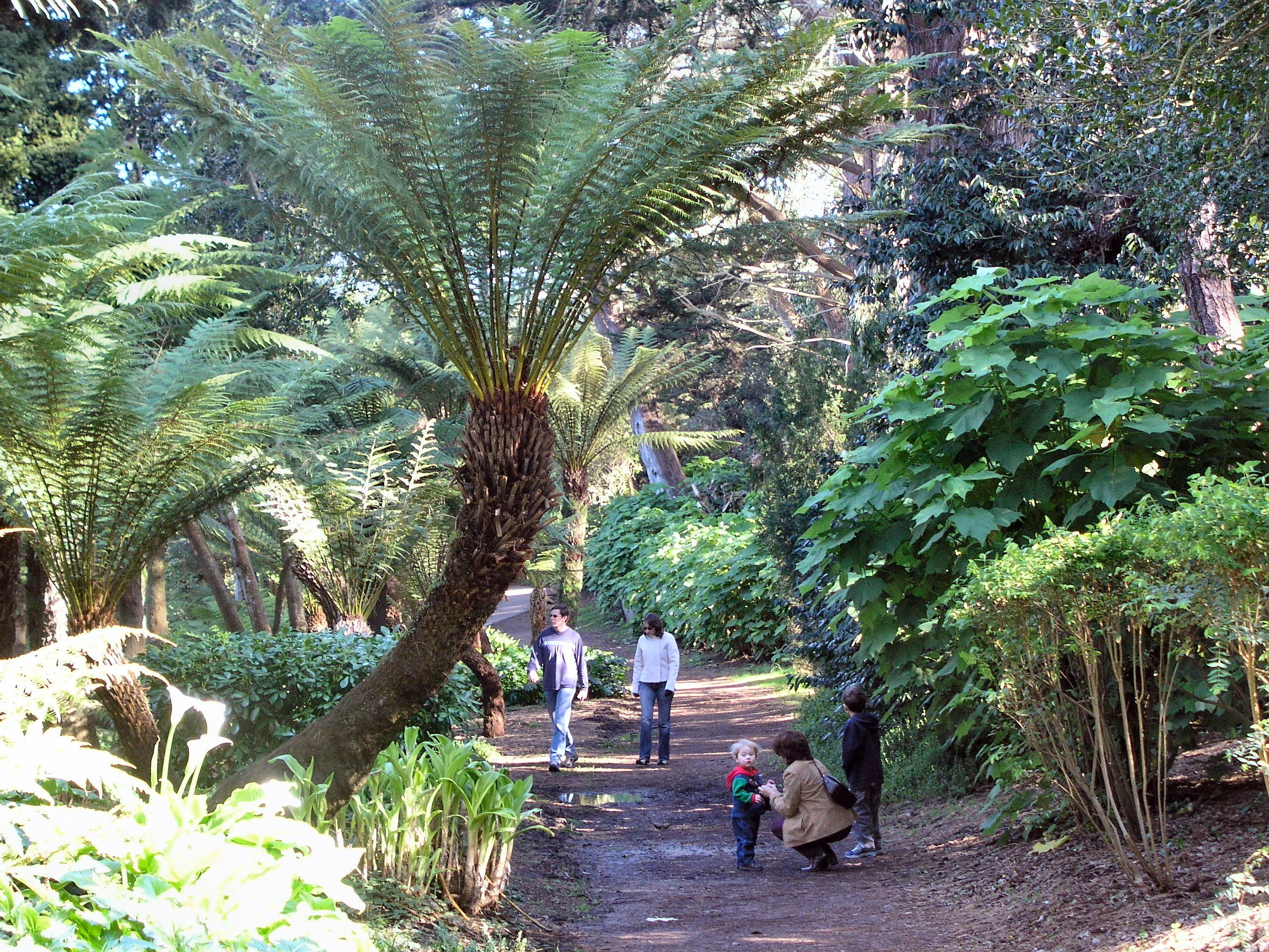 The Botanical Gardens In Golden Gate Park Are Wonderful For A Stroll. Due  To Our Temperate Climate, There Are Plants From A Wide Range Of Locationsu2026