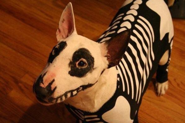 A Dog Wearing Skeleton Costume