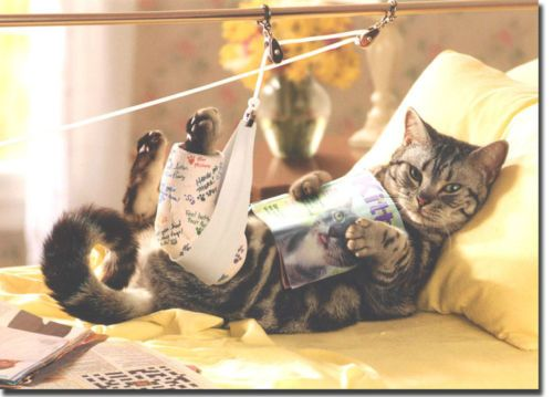 Cat in traction get well card greeting card by avanti press cat in traction get well card greeting card by avanti press m4hsunfo