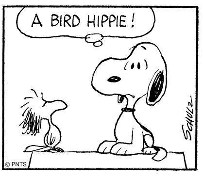 Bird Hippie Xd Snoopy Quotes Snoopy Love Snoopy Comics