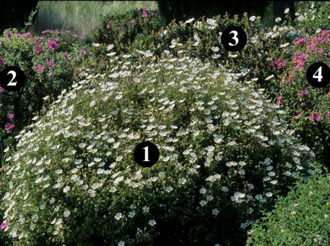 Des Idees De Plantes Pour Un Jardin Sec Jardin Sec Jardins Et