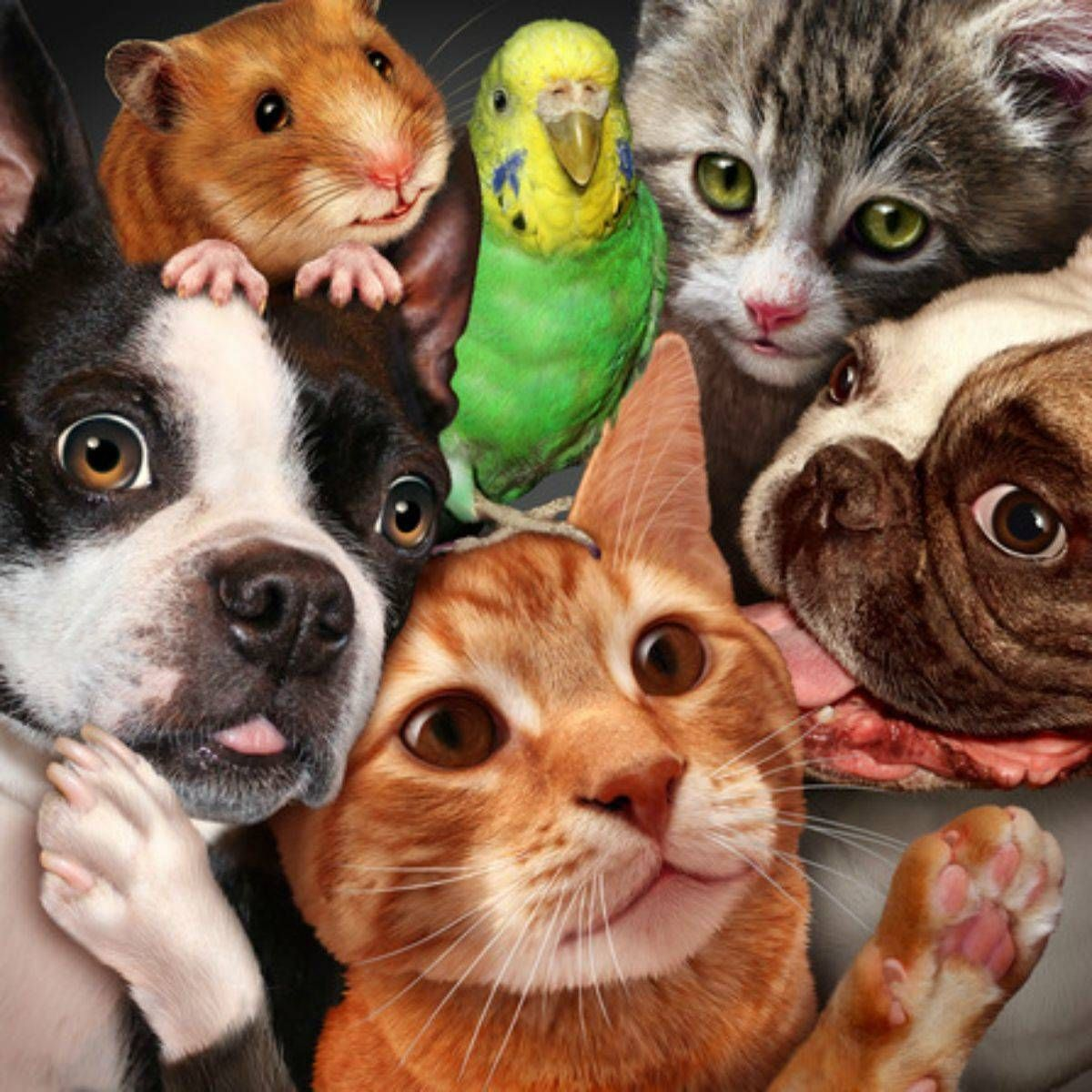 Pet Friendly Guide To Help You Care For Your Pet In Roseville Ca Pets Cute Animals Your Pet