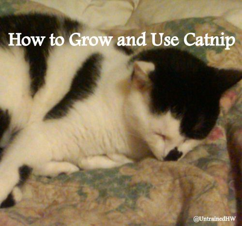 Cats And Catnip How To Grow And Use Catnip For Your Cat Catnip Cats Cat Entertainment