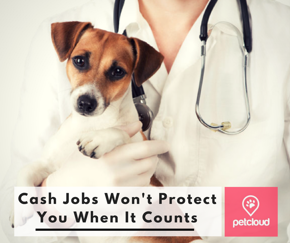 Cash Jobs Won T Protect You When It Counts Pet Sitting Jobs Work With Animals Pet Sitters