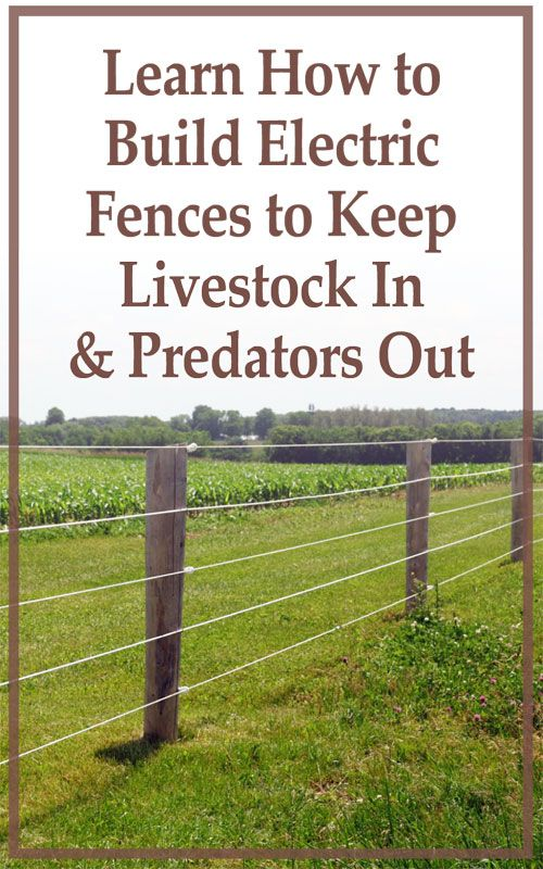 The Shocking Truth About Electric Fencing For Sheep Farm