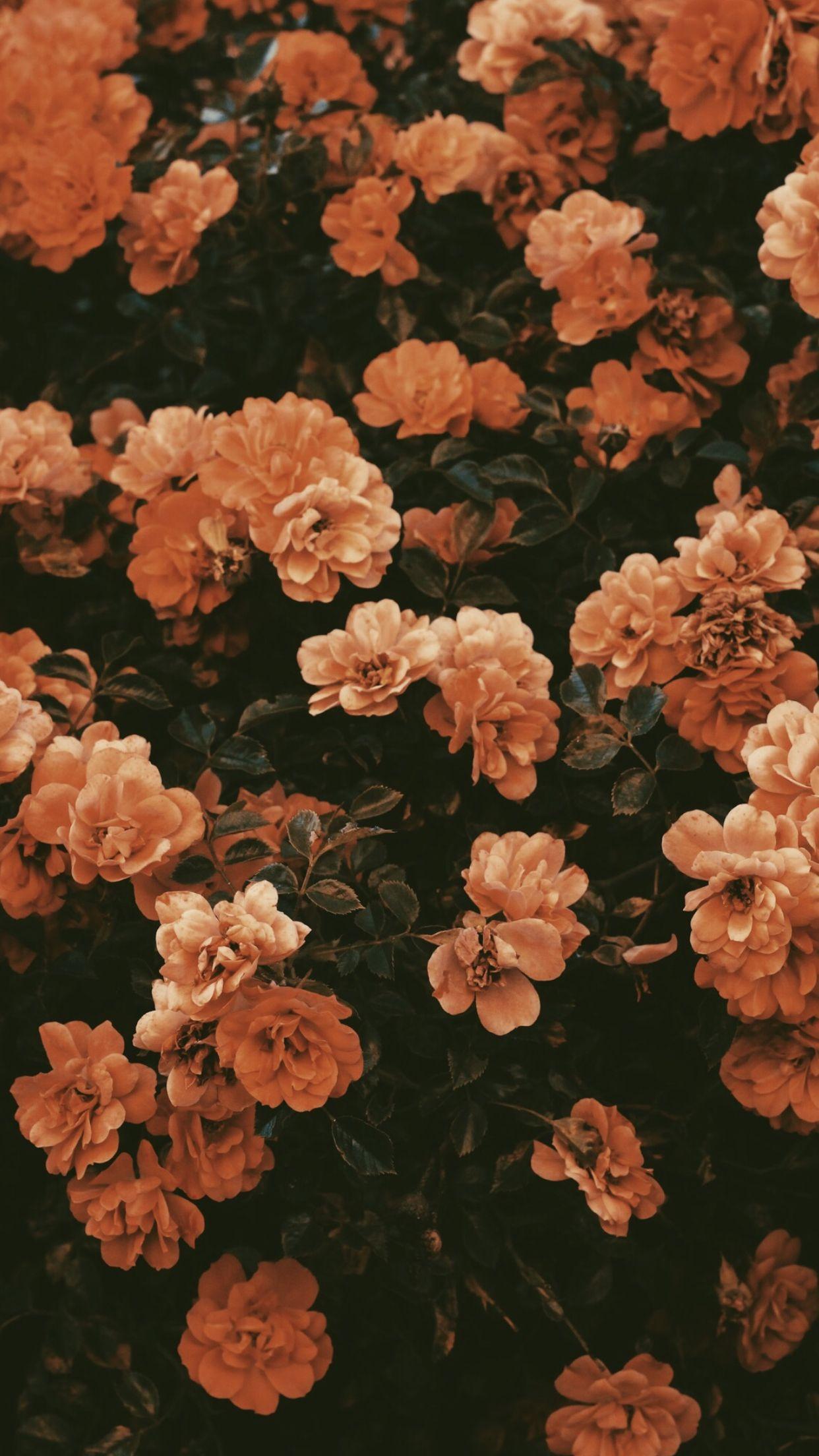 Fall Flowers Vintage Flower Backgrounds Flower Background Iphone Flower Iphone Wallpaper