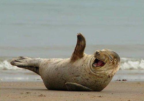Laughing seal