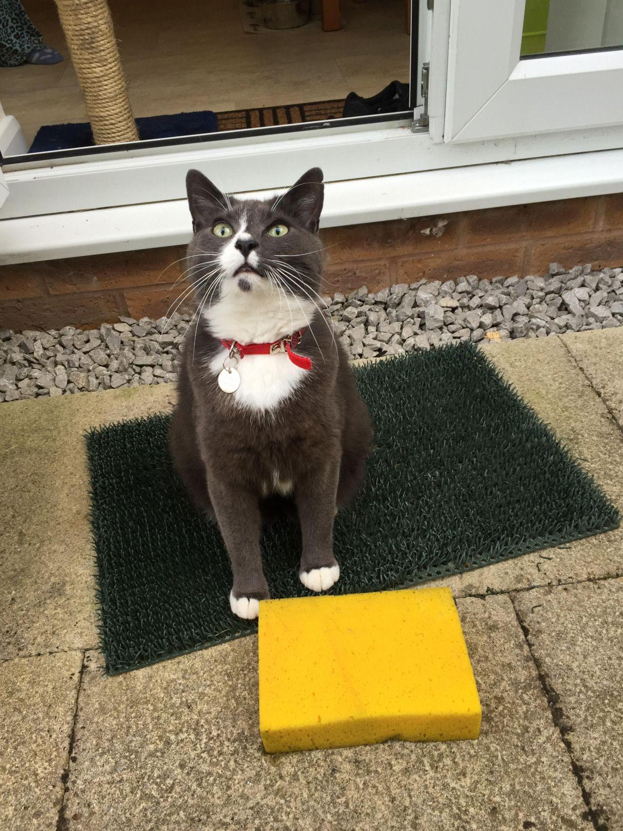 Our cat wont stop bringing home sponges!